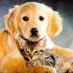 Tests ADN imposés par les éleveurs de chiens et de chats