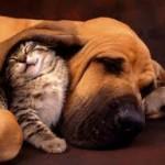 Quelles sont les maladies du sang qui affectent le chien?