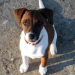 Amaguiz garanties mutuelles santé pour chiens et chats