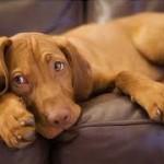 Délai de carence pour une mutuelle chien