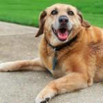 Mutuelle pour chien, repérer un cancer