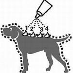 Santé du chien : comment employer une pipette antiparasitaire ?
