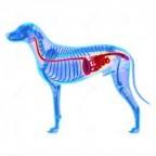 Santé chiens: maladies de l'appareil digestif