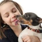 Santé chiens  : les zoonoses
