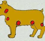 Santé chiens: les cancers