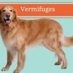 Santé chiens: les vermifuges