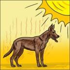 Santé chien: les coups de chaleur