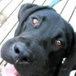 Santé chiens : les œdèmes