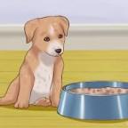 Santé chien: le sevrage des chiots