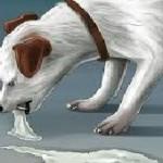 Chien malade vomissement – Que faire?