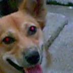 Mon chien a les yeux rouges – Que faire?