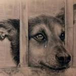 Mon chien a des écoulements aux yeux – Que faire ?