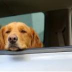 Mon chien est malade en voiture. Que faire?