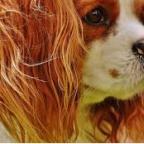Mon chien sent mauvais des oreilles – Que faire ?