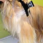 Le poil de mon chien n'est plus brillant mais terne – Que faire?