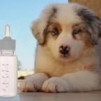 Comment allaiter artificiellement un chiot?