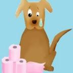 Santé chiens: la diarrhée