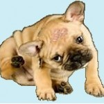 Santé chiens: les allergies