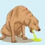 Santé chiens: la gastro-entérite aiguë