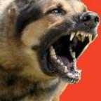 Santé chiens: la rage