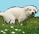 Santé chien: les colites