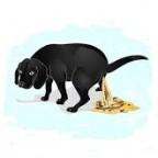 Santé chiens:L'insuffisance pancréatique exocrine
