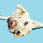Santé chiens: l'épilepsie