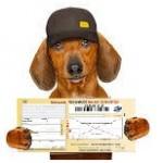La Loi Châtel & résiliation assurance chien