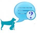 Forums mutuelles chiens et chats : questions récurrentes