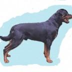 Quelles  races  de  chien préférées  par  les français: le Pinscher