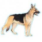 Races de chien les plus préférées de français :Berger de Beauce