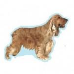 Races de chien les plus préférées de Français: le Cocker Anglais