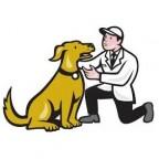 Santé chiens: identifier et éliminer la douleur