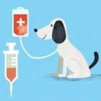 Pourquoi et comment  faire une prise de sang  a son chien ?
