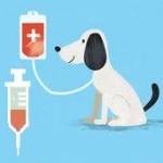 Pourquoi et comment  faire une prise de sang  a son chien