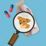 Sante animaux de compagnie : Les antibiotiques pour les chiens
