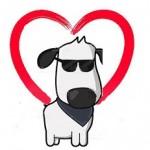 Comment s'occuper d'un chien aveugle?