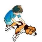 La maladie de Wilson chez le chien