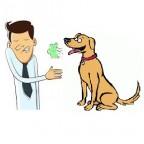 Sante chien: quel traitement pour la mauvaise haleine de son chien?