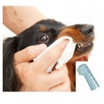 Santé chiens: quels sont les problèmes dentaires chez les chiens?