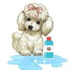 Santé chien: comment bien choisir le bon shampoing pour chien?