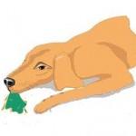 Santé chiens: comment réagir si son chien s'est empoisonné?