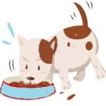 Santé chiens: Quelle alimentation pour les chiens de petite taille ?