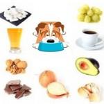 Santé chiens: quels sont les aliments dangereux pour les chiens?