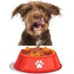 Comment choisir les bonnes croquettes pour son chien?