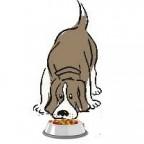 Sante chien: Quelle alimentation pour un chien de grande taille ?