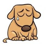 Santé chien  : Comment identifier et gérer la jalousie chez le chien?