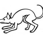 Comment savoir si le chien est-il dominant ou dominé?