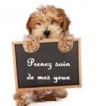 Santé chien: Comment nettoyer les yeux de son chien ?