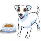 Santé chiens: L'alimentation du chiot
